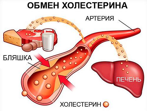 чеснок холестерин в крови