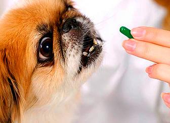 Витамины в рационе собак